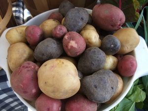 Red, Blue, and Gold Potatoes