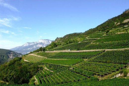 Mezzacorona Vineyards, Italy